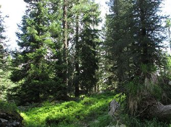 Vente terrain SAINT-LAUNEUC - photo