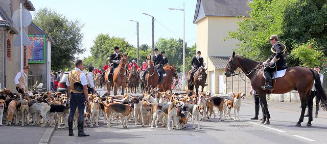 Fête du cheval à Loudéac dans les Côtes d'Armor